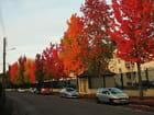 Boulevard des couleurs.