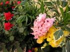 Bouquet (93)