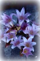 Bouquet de lys...