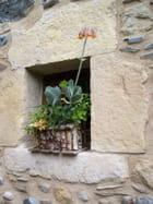 Bouquet de plantes grasses