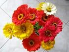 Bouquet de zinnias