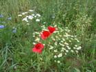 Bouquet estival