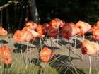 Bouquet insolite