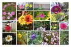 Bouquets des fleurs chiliennes