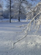 Branche de neige