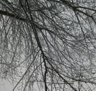Branche, verglas et neige
