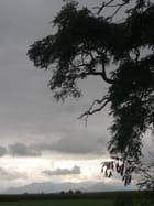 Branches et ciel