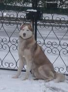 Bruce dans la neige