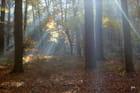 brume de novembre percée par le soleil
