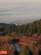 Brume hivernal en Charolais