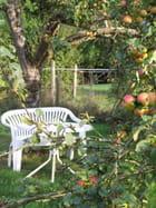 C'est la période pour hocher les pommes!!!