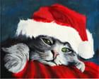 C'est Noël pour mon chat
