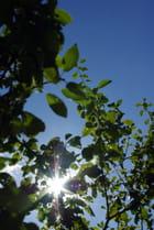 Cache-cache soleil : entre les branches.