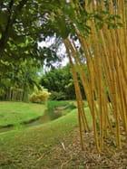 caché dans les bambous