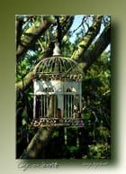 Cage en liberté