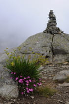 Cairn fleuri