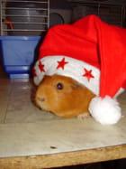 Caline, mon cochon dinde fête Noël