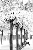 Calme et sérénité au sein d'un parc, en noir et blanc!