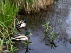 Reserve naturelle de l'étang d'Isle à Saint Quentin