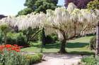 Cascade de fleurs