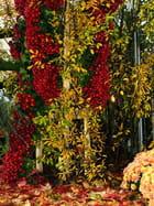 Cascade de fleurs d'automne