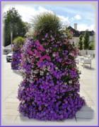 Cascade de fleurs sur le parvis