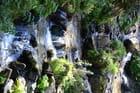Cascade sauvage
