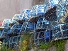 casiers à homards bleus