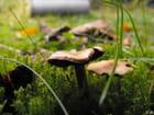 Champignons d'automne