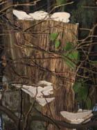 Champignons d'automne et d'hiver