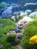 Champs de corail