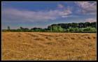 champs fauché