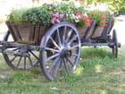 Charette de fleurs