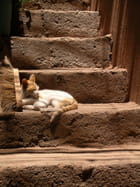 Chat du maroc