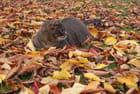 Chat en automne