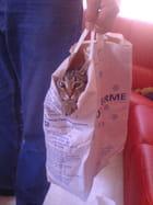 Chat en sac