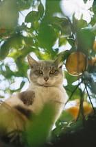 Chat perché dans un orangers