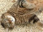 Chat se massant au soleil