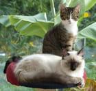 chats et l'arbre
