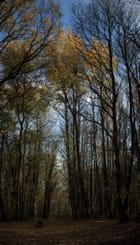 Chemin dans la Forêt Montgé