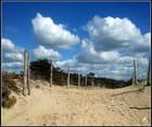 Chemin dans les dunes...