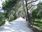 Chemin des annamites