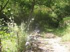 Chemin ensoleillé