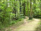 Chemin et sous bois