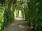 Chemin sous les ombrages