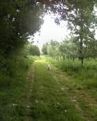 Chemin vert