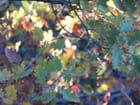 Chêne aux couleurs automnales
