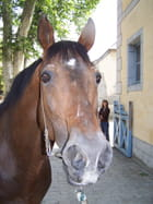 Cheval curieux!