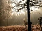 Cheval embrumé