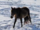 Cheval en hiver.